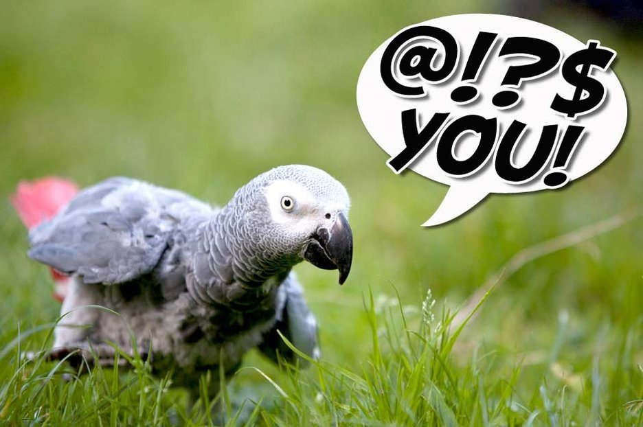 Swearing parrot turns the air blue in a WELSH accent