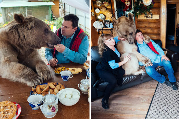 Cute Or Crazy Brave Couple Adopt 7ft BEAR As Their Pet