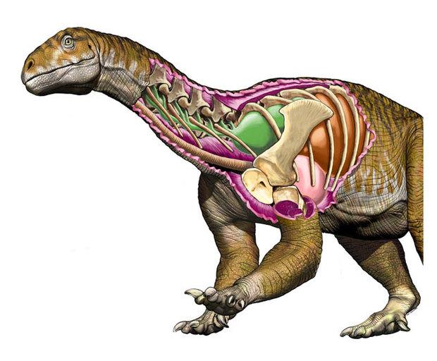 Ingentia Prima dinosaur
