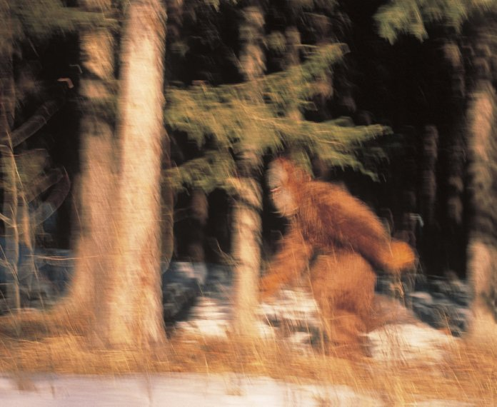 Blurred Bigfoot Running Through the Trees