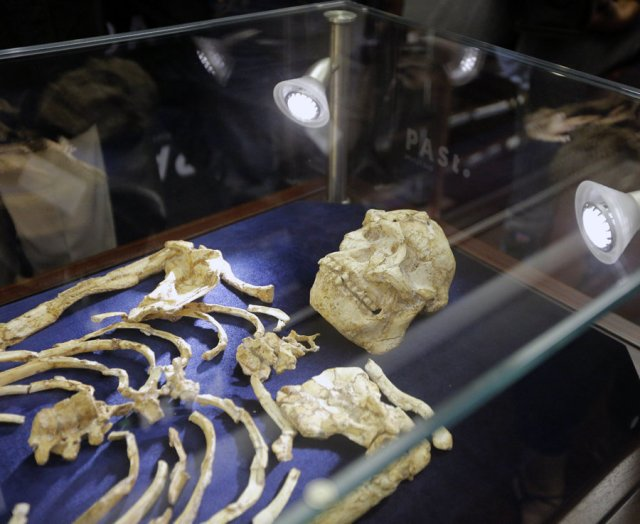 The remains were discovered 20 years ago at the Sterkfontein Caves near Johannesburg