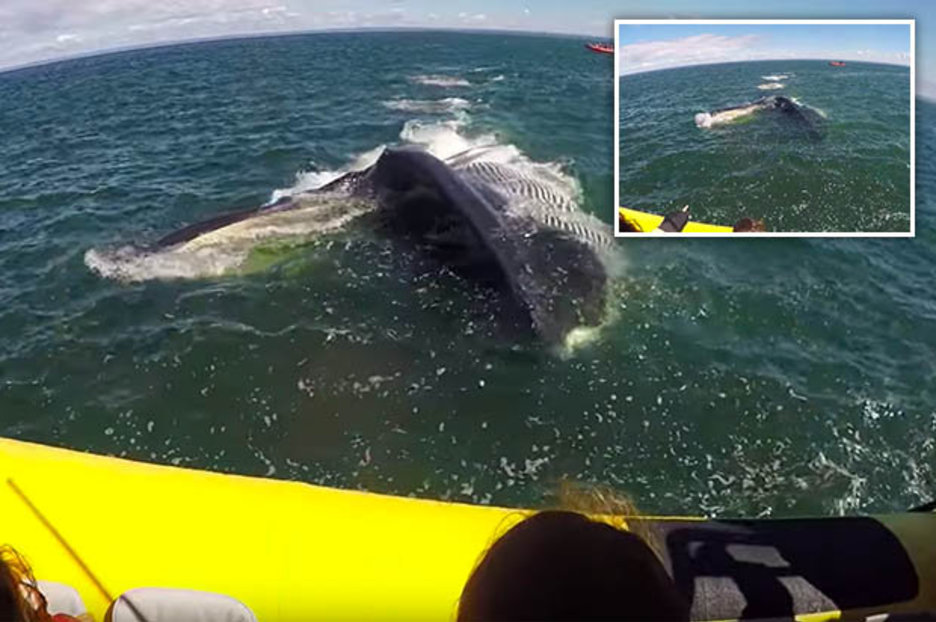 Giant fin whale comes close to swallowing boat full of