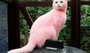 hunt sick yobs dyed cat