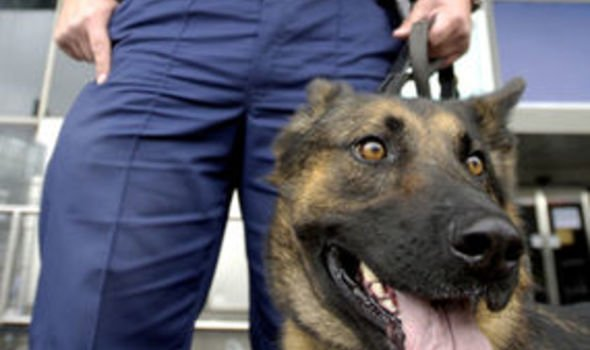 Sniffer dogs could be banned