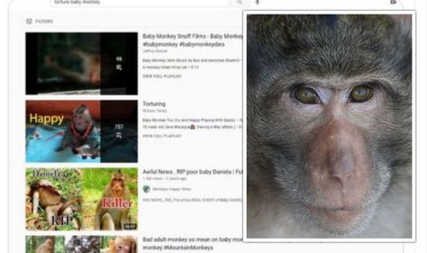 YouTube hosts HUNDREDS of 'disgusting' videos showing baby monkeys being tortured & killed