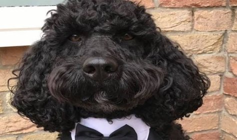BBC Breakfast's Rory the Vet picks Waggy tailed cockapoo Ernie as dog show winner