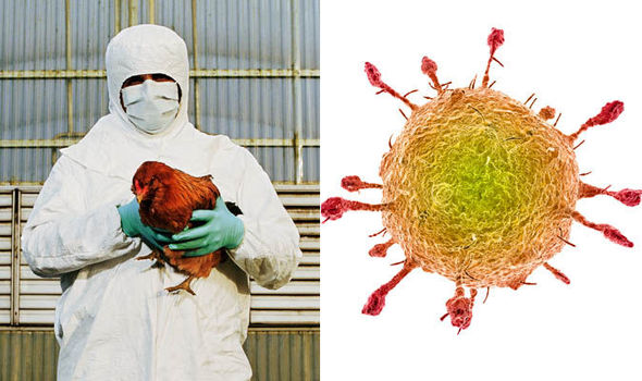 Bird flu image