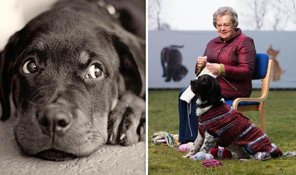 Woman knitting overcoat for dog