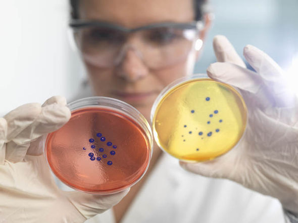 Woman looking at germs