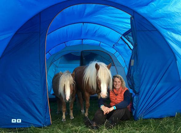 Emma Massingdale shetland ponies
