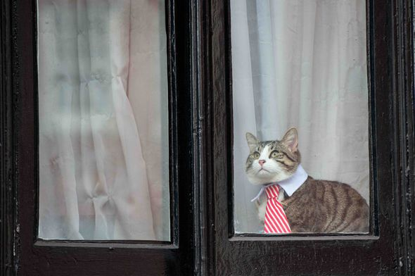 James the cat might not be feline fine about the election