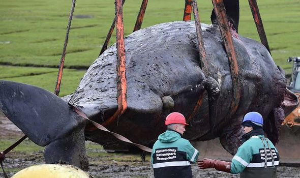 Whale rescued