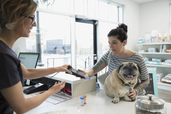 A pug at the vet