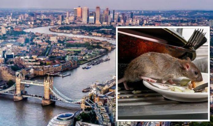 Rat warning: 'Flushed out' pests invade UK homes – 'health risks' identified by experts
