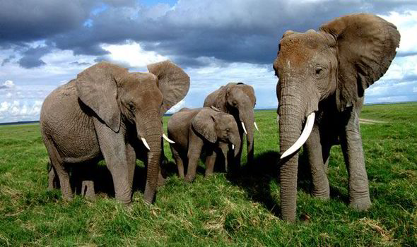 Top 10 Facts About Elephants Top 10 Facts Life Amp Style