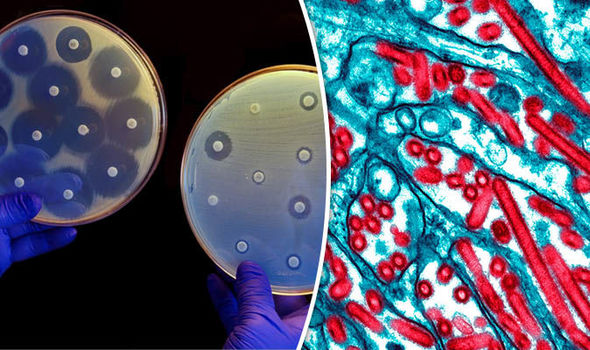 Antibiotic resistance split