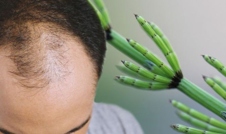 Hair loss treatment: Horsetail's silica and calcium content may encourage hair regrowth