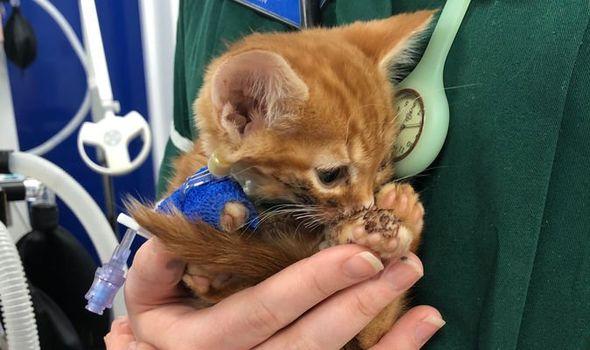 cat news kitten fights