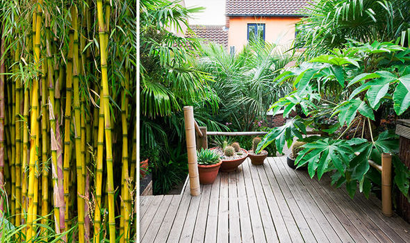 bamboo warning gardeners warned
