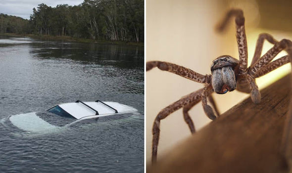 Huntsman spider causes driver to plough car into lake in Australia  Nature  News  Expresscouk