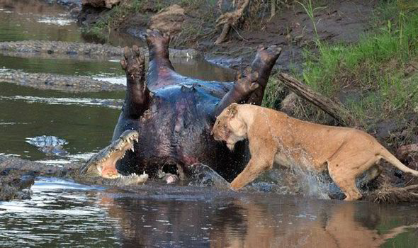 The incredible battle was caught on camera by Richard Chew