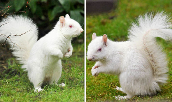 albino animals rare white