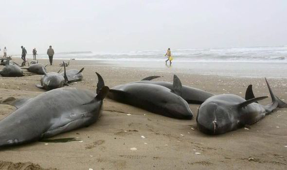 the dolphins on the sand
