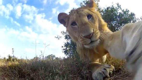 Elephant selfie Animal takes first elfie after phone dropped in wildlife park  Nature  News