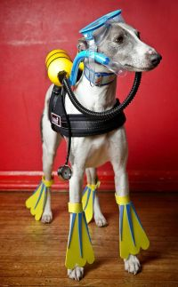 Cute animal pictures: Dogs dress up for canine fancy dress ...