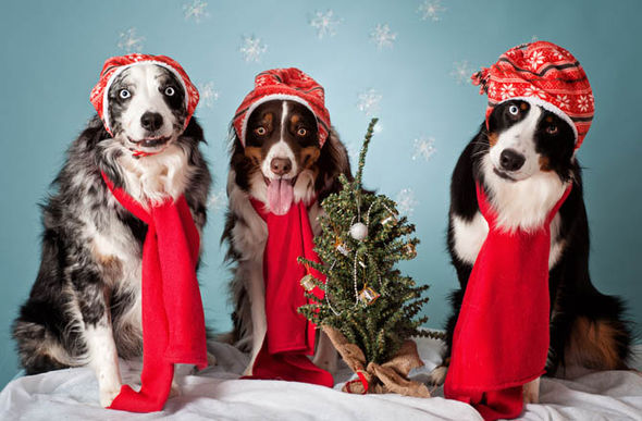 Owners To Buy Christmas Presents For Their Pets Nature