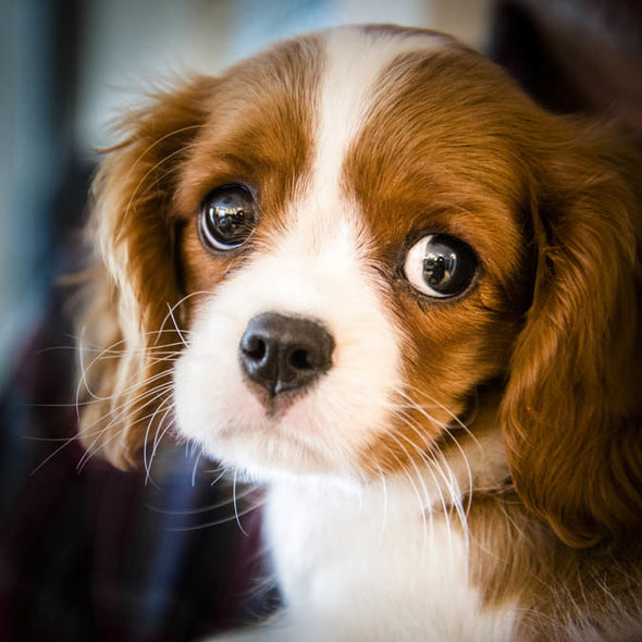 cute puppy pictures the