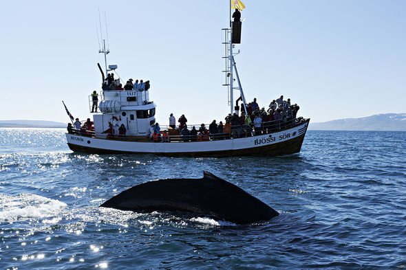 Tourists are increasing demand (Image: ullstein bild/Getty)