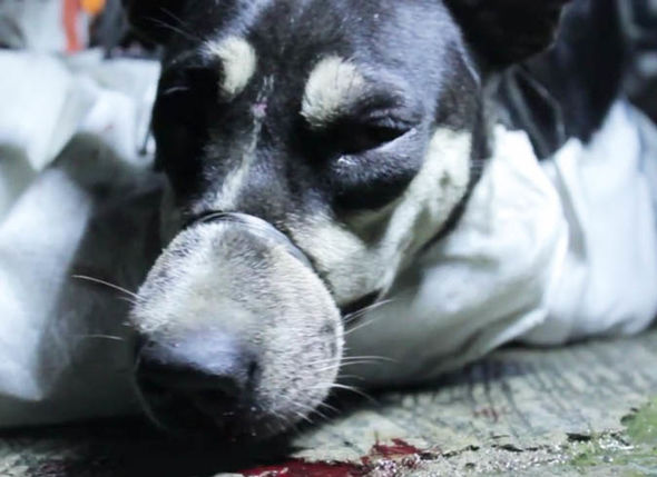 The remote island of lembata, flores, in indonesia has traditionally been a whaling community. WATCH: Horrific footage shows terrible dog cruelty in