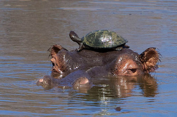 Image result for Image hippo