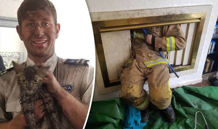 Animal rescue  RSPCA inspector rescues kitten stuck up a chimney  Nature  News  Expresscouk