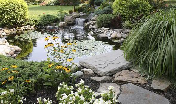 design garden pond