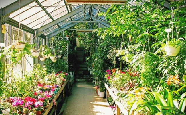 Alan Titchmarsh On The Advantages Of A Greenhouse Garden