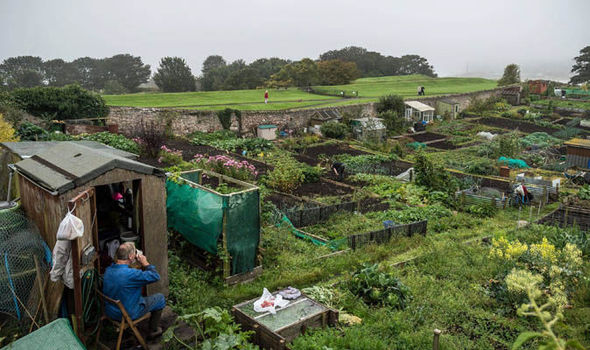the allure of allotments