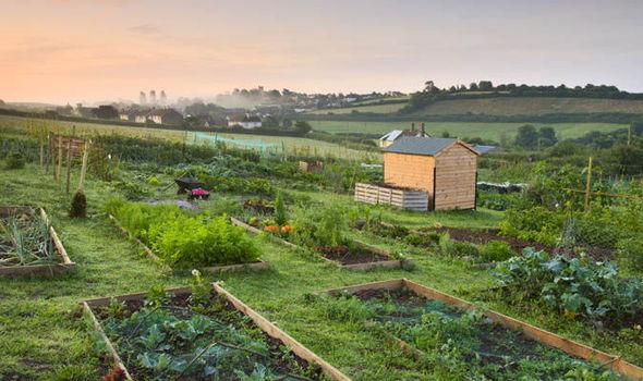 gardening just 30 minutes