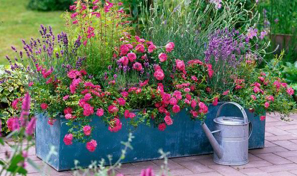 Alan Titchmarsh On Colourful Garden Plant Containers Garden