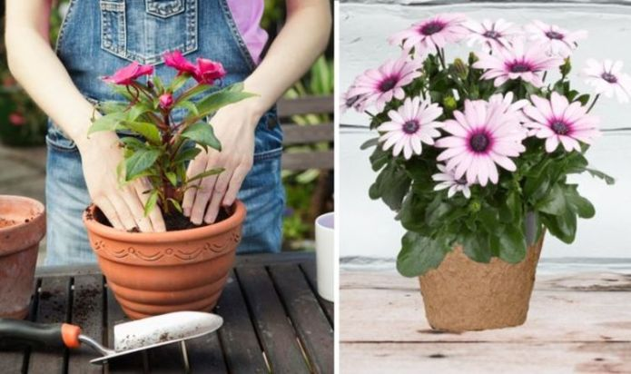 'Add colour to your garden': Best plants & garden tips to make you feel like you're abroad