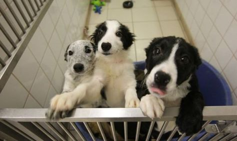 'Dog census' reveals millions who bought puppies during pandemic underestimated challenge