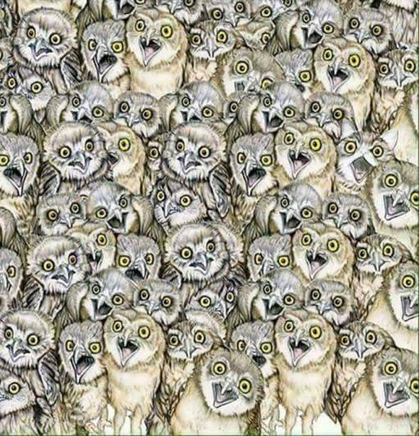 optical illusions find cat # 4