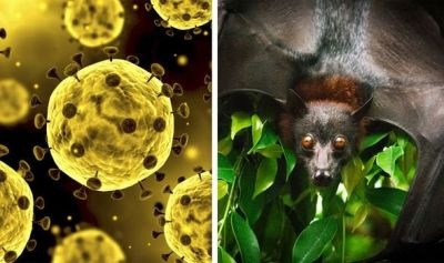 Why do bats spread so much virus-BOHRN-Telugu Science and Tech news