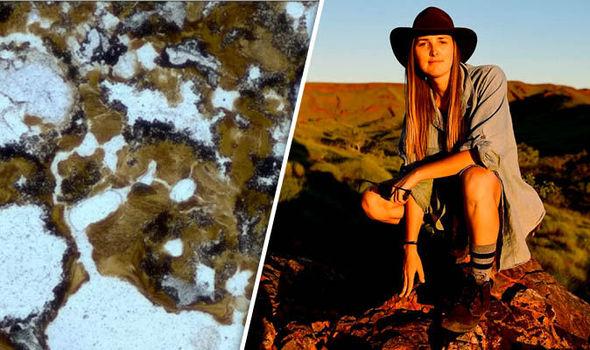 fossil Pilbara region Australia