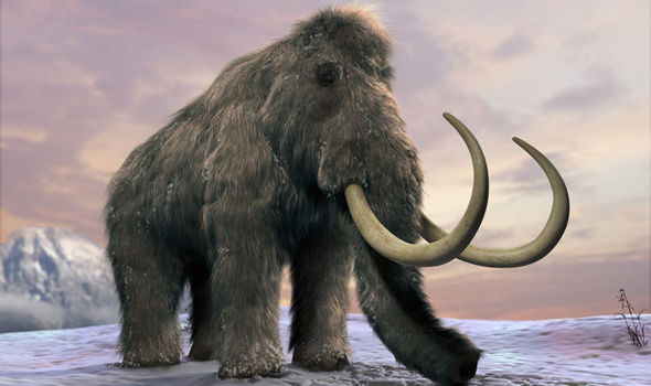 Mammoth Bones Discovered Oregon State