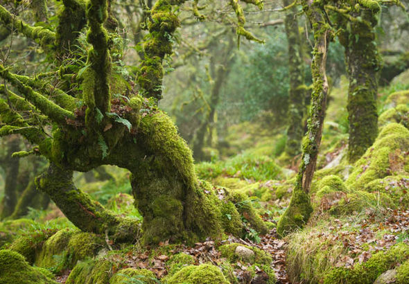 Woodland with moss