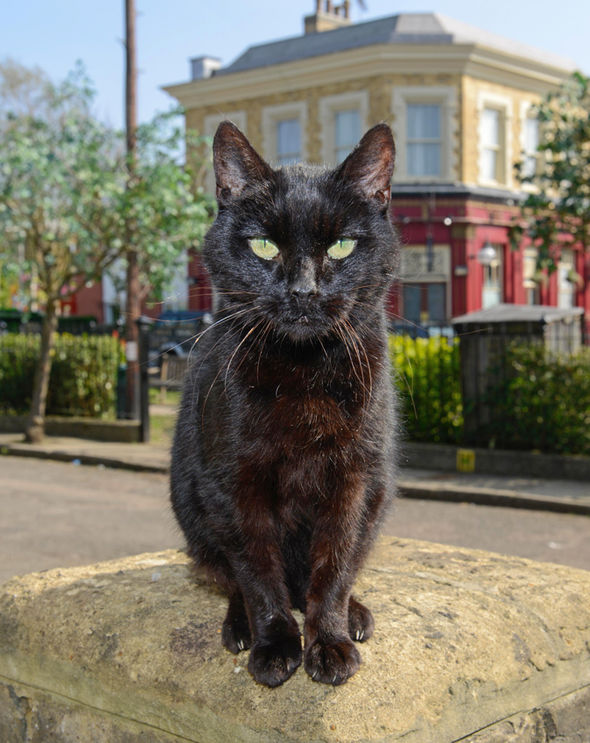 EastEnders spoiler Dave the cat will have no competition now Robbie Jackson's Wellard II has died