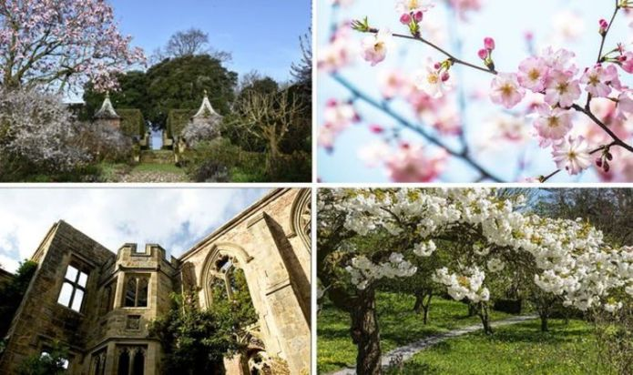 Best National Trust properties to see beautiful Cherry Blossom displays this spring