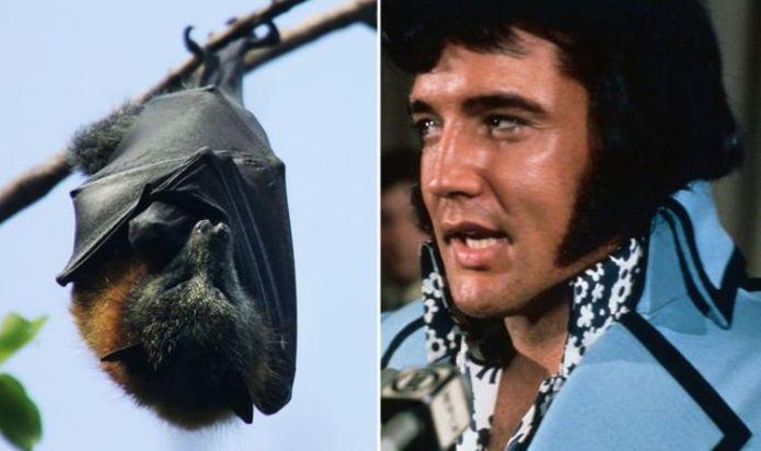 Elvis Presley's confrontation with a bat hiding in Graceland's attic described by cousin